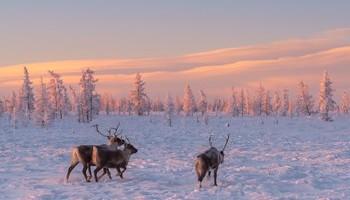 Междисциплинарный полевой курс «Арктические междисциплинарные исследования - ARCTIS2020»